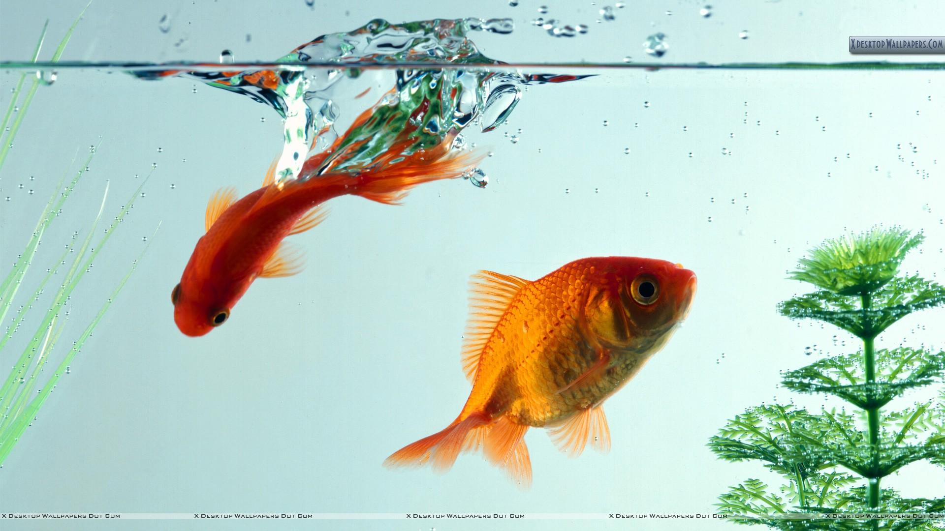 Fish Aquarium -