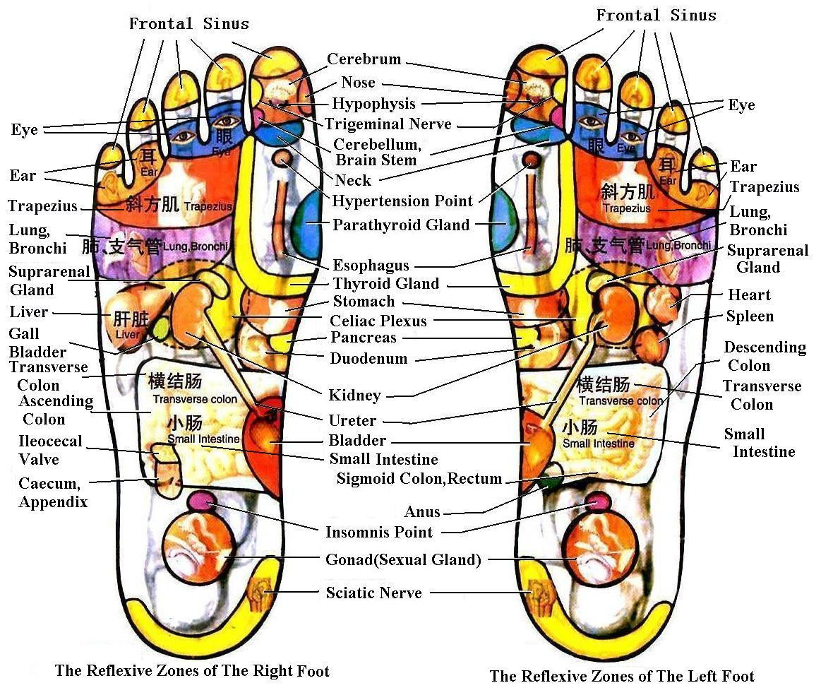 reflexology feet chart