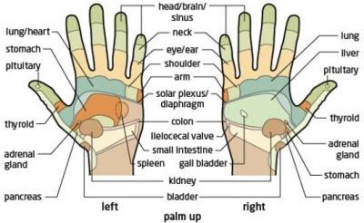 reflexology-hand chart