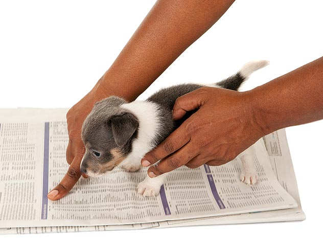 , How to potty-train your dog