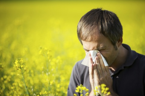 How to reduce pollen allergy with a help of nature