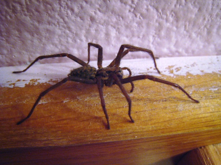 4 ways to expel spiders from your household
