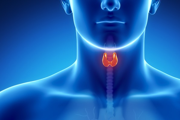 Self-examine your thyroid gland